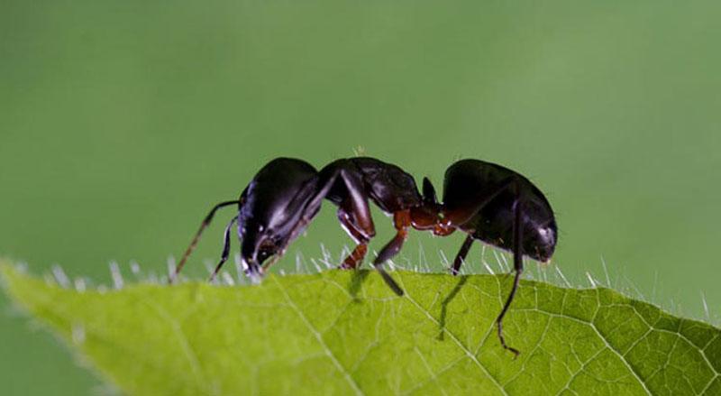 Controllo degli insetti